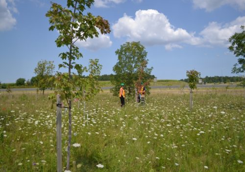 Greening the Canadian Landscape