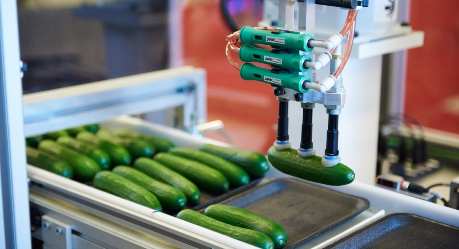 Automated Mini-Cuke Packer