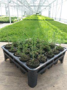 RootSmartTM propagation tray
