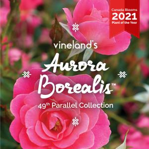 Aurora Borealis™ now available